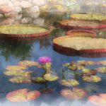 Victoria Water Lilies by Nancy Myer, f16 Digital, Score: 10