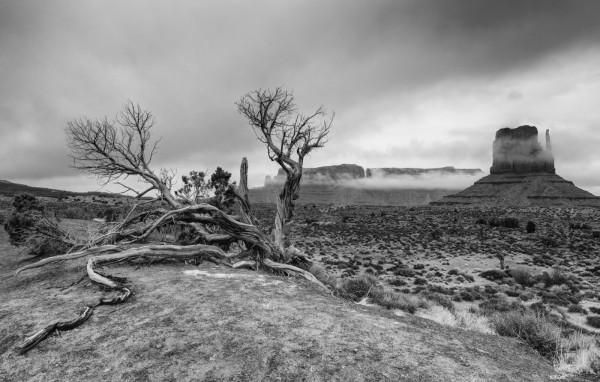Resilient by Jeff Owens, f11 Digital, Score: 9