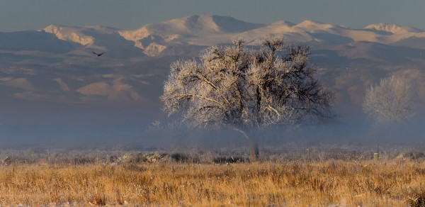 High Plains Vista by Leander Urmy, f16 Digital, Score: 9