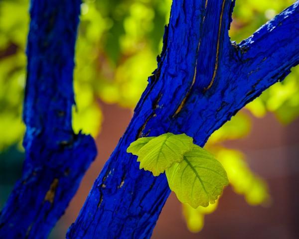 Not Your Usual Tree by Leander Urmy, f16 Digital, Score: 9
