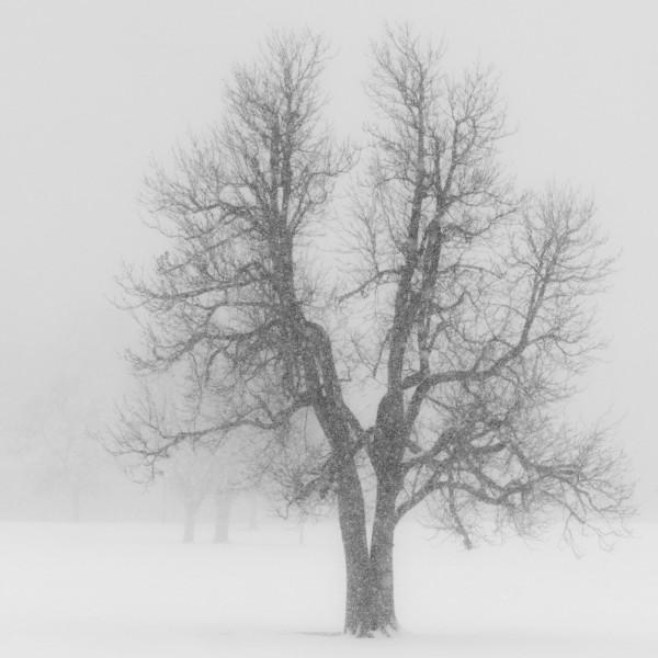 Winter Tree – Snowstorm by Nancy Myer, f16 Digital, Score: 9