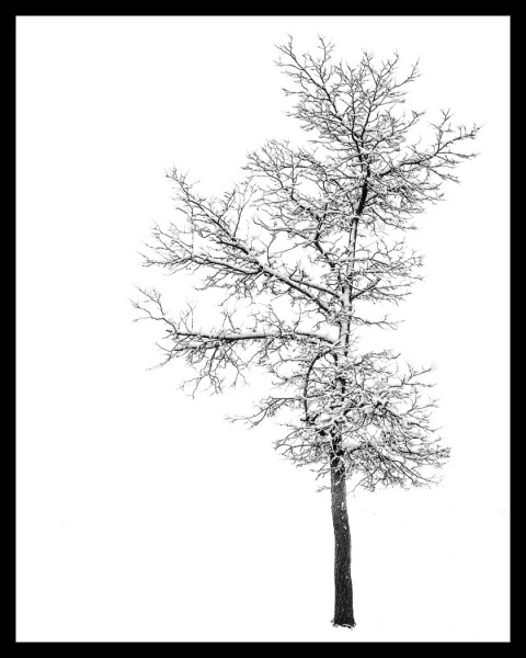 Winter Coat by Todd Soderstrom, f8 Digital, Score: 10