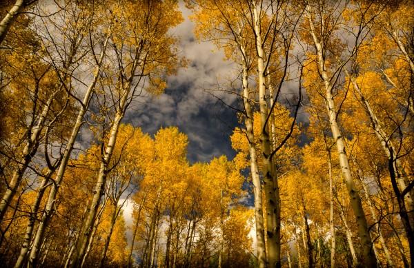Reaching for the Sky by Wayne Corrigan , f16 Digital, Score: 9