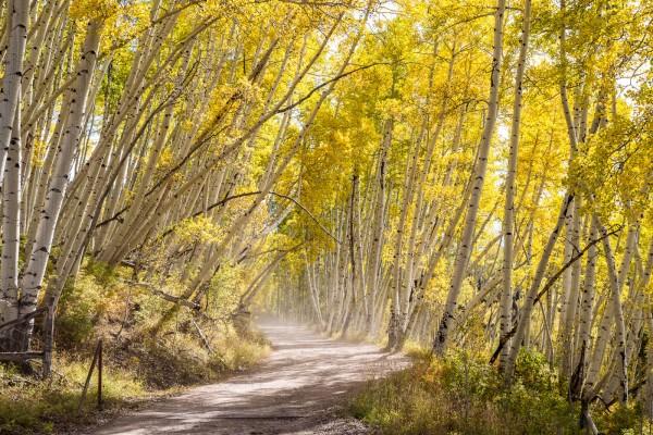 Whimsical Aspen Lane by Clint Dunham, f8 Digital, Score: 10