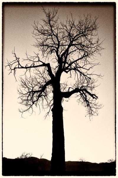 Lone Sentinel by Clifford Stockdill, f5.6 Digital, Score: 9