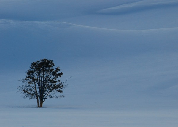 Lone Tree Hayden Valley by Elmer Paetow, f11 Digital, Score: 10