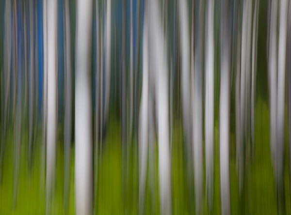 Abstract Forest by Heidi Witherell, f11 Digital, Score: 10