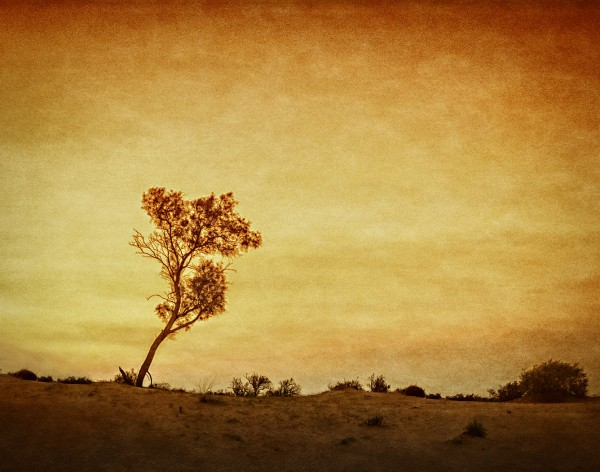 A Tree in the Negev by Travis Broxton, f16 Digital, Score: 9