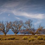 Cottonwoods with Waning Moon by Dave Hull, f5.6 Digital, Score: 10