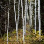 San Juan Aspen Grove by Dave Hull, f5.6 Digital, Score: 9