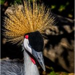Crowned Crane by Leander Urmy, f16 Digital, Score: 9