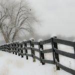 Snowy Morning in Colorado by Gwen Paton, f8 Digital, Score: 10
