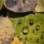 Seasons End by Gary Witt, f16 Color, Score: 9