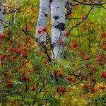 Fall Tapestry by Leander Urmy, f16 Digital, Score: 9