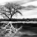Mystical Reflection by Leander Urmy, 1st f11 Digital