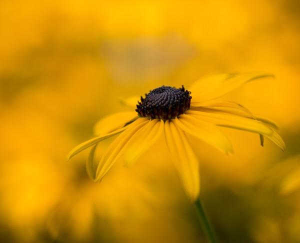 Mellow Yellow by Brian Donovan, f11 Digital, Score: 9
