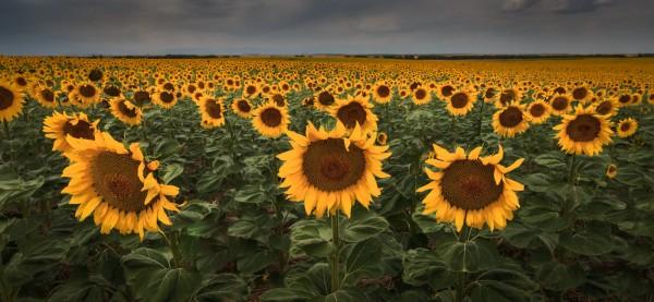 Fields of Gold by Butch Mazzuca, f11 Digital, Score: 9
