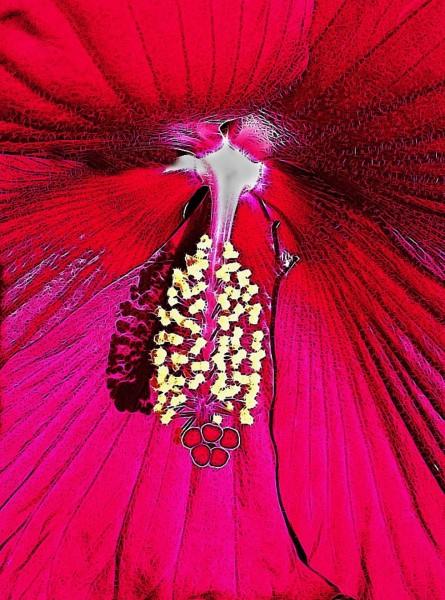 Inner Beauty by Gwen Piña, f11 Digital, Score: 9