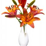 Orange Asiatic Lilies by Charles Hopkins, f16 Digital, Score: 9