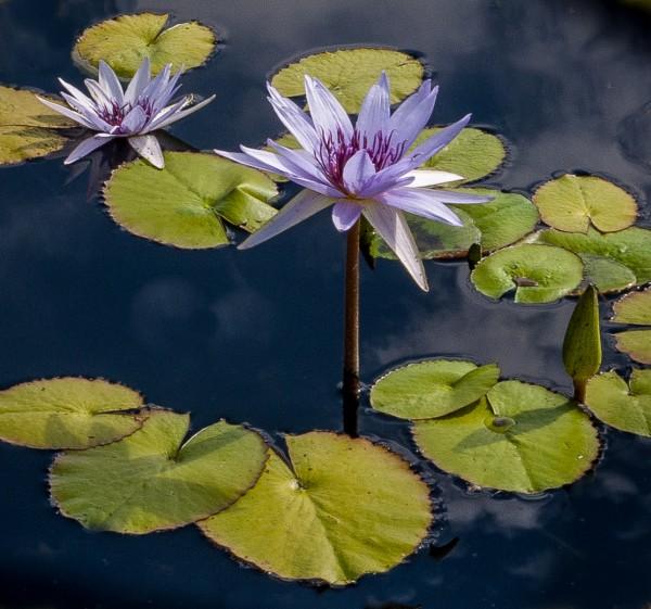 Soon to Bloom by Wayne Corrigan, f11 Digital, Score: 10