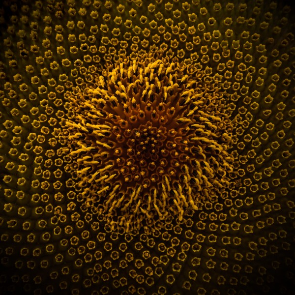 Nature's Spirograph by Alicia Glassmeyer, f8 Digital, Score: 10