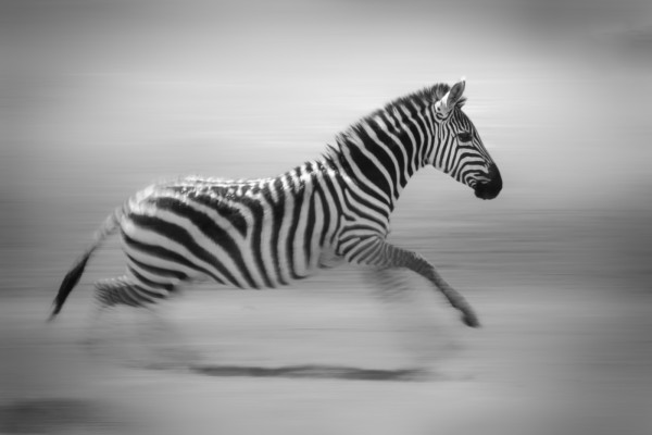 Stripes in Motion by Butch Mazucca, f16 Digital, Score: 10