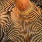 Hypnotic Shrooms by Gwen Piña, f11 Digital, Score: 10