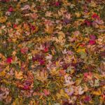 Autumn Leaves by Lucius Ashby, f8 Color, Score: 9