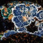Blue Lichen by Larry Hartlaub, f8 Digital, Score: 10