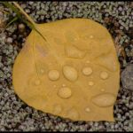 Harbinger of Autumn by Nancy Myer, f16 Digital, Score: 10