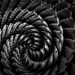 Nature's Spiral by Oz Pfenninger, f16 Monochrome, Score: 10