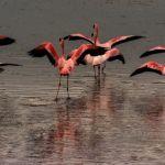 Nervous Flamingoes by Oz Pfenninger, f16 Digital, Score: 9