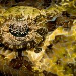 Underwater Lace by Dave Hull, f5.6 Digital, Score: 10
