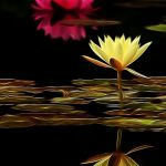 Water Lilies Aglow by Nancy Myer, f16 Digital, Score: 9