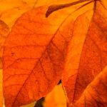Fall Leaves by Barbara Kennedy, f11 Digital, Score - 9