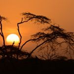 Tanzanian Sunrise by Mary Paetow, f16 Digital, Score: 10