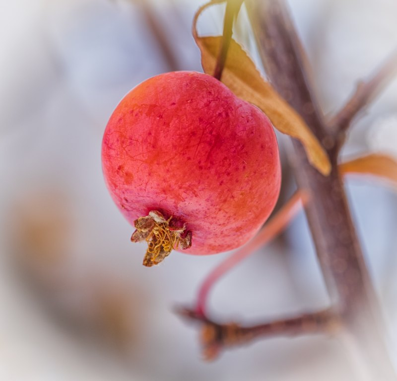 Crabapple by Ally Green, f11 Color Digital, Score: 9