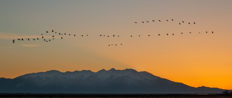 Morning Cranes by Clifford Stockdill, f11 Color Digital, Score: 9