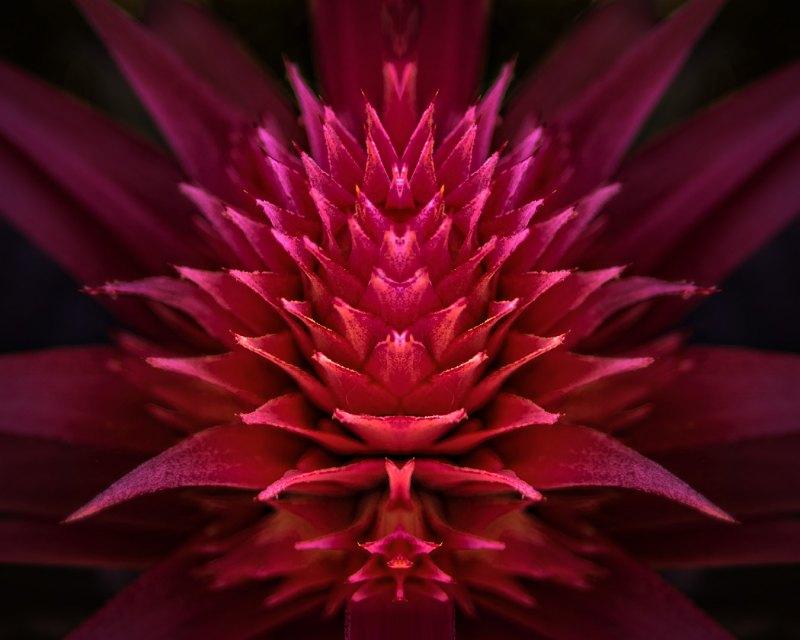natures design by Travis Broxton, f16 Color Digital, Score: 10