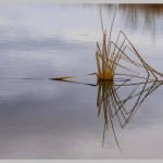 Reflection of Nature by Gwen Paton, f16 Color Digital, Score: 9