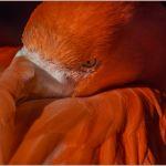 The Watchful Eye by Nancy Myer, f16 Color Digital, Score: 10