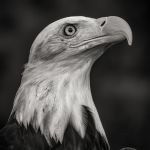 Hold Your Head High by Todd Lytle, f16 B&W Digital, Score: 10