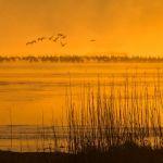 Misty Morning by Danny Lam, f16 Color Digital, Score: 9