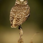 What a Hoot! by Gwen Pina, 1st f5.6 Color
