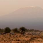 Beneath Kilimanjaro by Joe Bonita, 1st f16 Color