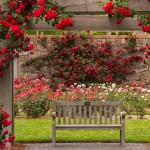 Bench in the Rose Garden by Nancy Myer, HM f11 Digital