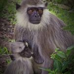 Nursing Monkey Mother by Laura Moran, f5.6 Digital, Score: 10