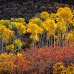 Autumn Parade by Gary Witt, f16 Color, Score: 10
