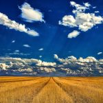 Sting's Fields of Gold by Larry Hartlaub, f11 Digital, Score: 10