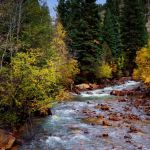 Autumn on the River by Susan Haffke, f5.6 Digital, Score: 10